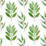 Naadloos patroon van waterverfeucalyptus, varen en baai op witte achtergrond stock illustratie