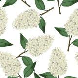 Naadloos patroon van witte seringentakken Stock Afbeeldingen