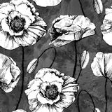 Naadloos patroon van zwart-witte papavers Stock Fotografie