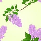 Naadloos textuur Lilac takje met bloemen en bladerenvector Stock Afbeelding