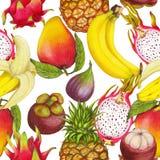 Naadloos tropisch patroon van hand getrokken verse sappige vruchten stock illustratie