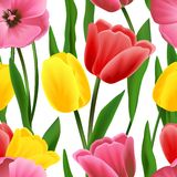 Naadloos tulpenpatroon Stock Foto's