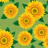 Naadloos van zonnebloemen. Stock Afbeeldingen