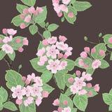 Naadloos vector bloemenpatroon Stock Afbeelding