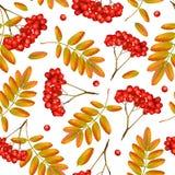 Naadloos vector de herfstpatroon royalty-vrije illustratie