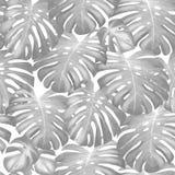 Naadloos vector tropisch patroon met groene monsterapalmbladen vector illustratie