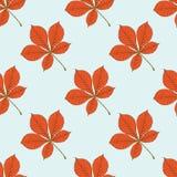 Naadloos vectorpatroon met de herfstbladeren Kastanjeblad Stock Fotografie