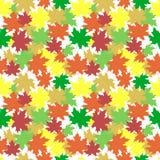 Naadloos vectorpatroon met esdoornbladeren Stock Afbeeldingen
