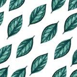Naadloos waterverfpatroon Groene bladeren op witte achtergrond Royalty-vrije Stock Afbeelding