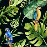 Naadloos waterverfpatroon van tropische bladeren, dichte wildernis Ha Stock Afbeeldingen