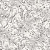Naadloze achtergrond. de palm van bladerenmonstera Royalty-vrije Stock Fotografie