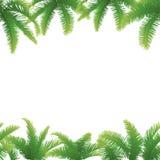 Naadloze achtergrond, palmbladen Stock Afbeelding