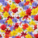 Naadloze achtergrond met bloemen Royalty-vrije Stock Foto