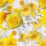 Naadloze achtergrond met gele en witte bloemen Royalty-vrije Stock Fotografie