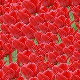 Naadloze achtergrond met rode tulpen Royalty-vrije Stock Foto's