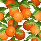 Naadloze achtergrond met sinaasappelen en bladeren. Vectorillustratie. Stock Afbeelding
