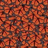 Naadloze achtergrond met vlinder Stock Fotografie