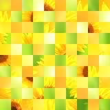 Naadloze achtergrond met zonnebloempatronen Stock Afbeeldingen
