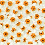 Naadloze achtergrond van bloemen witte narcissen Stock Foto