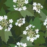 Naadloze achtergrond van bos van tot bloei komende viburnumbloem Royalty-vrije Stock Foto