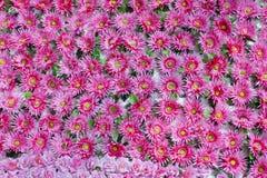 Naadloze achtergrond van overvloeds de roze natuurlijke bloemen Stock Afbeeldingen