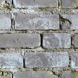 Naadloze achtergrond - vuile beschimmelde bakstenen muur Royalty-vrije Stock Fotografie