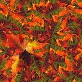 Naadloze achtergronddiepatroontextuur van esdoornbladeren wordt gemaakt Stock Foto's