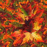 Naadloze achtergronddiepatroontextuur van esdoornbladeren wordt gemaakt Royalty-vrije Stock Foto