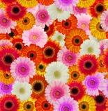Naadloze bloemachtergrond Royalty-vrije Stock Afbeeldingen