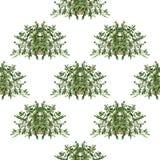 Naadloze bloemenpatroon Italiaanse kruiden Royalty-vrije Stock Afbeeldingen