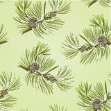 Naadloze de boomtak van de textuurpijnboom met denneappels met sneeuwvector Royalty-vrije Stock Foto