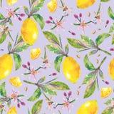 Naadloze de citroenboom van de patroontak in waterverfstijl Stock Afbeelding