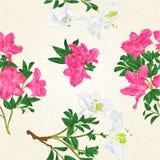Naadloze de tak uitstekende vector van de textuur Witte en roze rododendron Royalty-vrije Stock Afbeeldingen