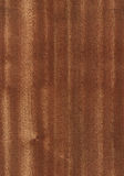 Naadloze eucalyptustextuur Royalty-vrije Stock Foto's