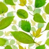Naadloze groene bladerenachtergrond Stock Foto