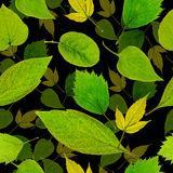 Naadloze groene bladerenachtergrond Stock Foto's