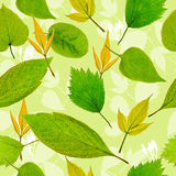 Naadloze groene bladerenachtergrond stock afbeeldingen