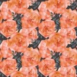 Naadloze het patroonachtergrond van waterverfbloemen Stock Afbeeldingen