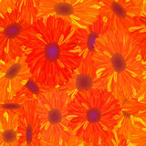 Naadloze patroon geeloranje bloem. Stock Afbeeldingen