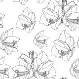 Naadloze patroon van Hippeastrum het lilly bloeiende bloemen vector illustratie