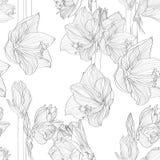 Naadloze patroon van Hippeastrum het lilly bloeiende bloemen Zwarte lijnbloemen royalty-vrije illustratie