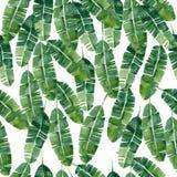 Naadloze patroon van waterverf het tropische bladeren Stock Afbeeldingen