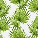 Naadloze patroon van waterverf het tropische palmbladen Royalty-vrije Stock Fotografie