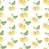 Naadloze patroon van waterverf het witte kersen Royalty-vrije Stock Afbeelding
