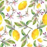 Naadloze patrooncitroenen met groene bladeren, citroenplakken en bloemen Royalty-vrije Stock Foto's