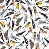 Naadloze patroonvogels Royalty-vrije Stock Foto