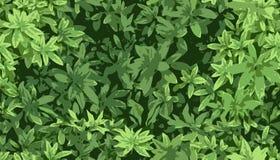 Naadloze textuur met groene bladeren Royalty-vrije Stock Foto