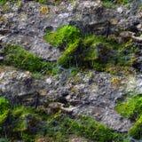 Naadloze textuur met vormmos en spinnewebben Royalty-vrije Stock Foto