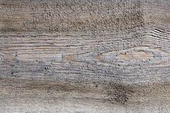 Naadloze textuur natuurlijke lichte houten ruw Stevige houten textuur zonder naad, berkraad Achtergrond van hout stock foto