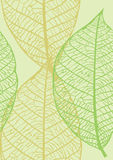 Naadloze textuur van bladeren Royalty-vrije Stock Foto's